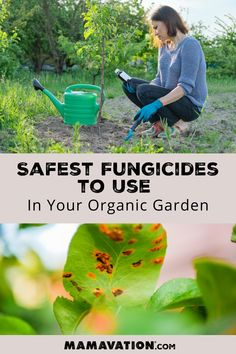 Have you ever wondered which natural fungicides are approved to use in an organic garden? Mamavation looked to fungicides and found all the ones approved by the organic standards and are available to you online. Discover the safest fungicides to use in your organic garden on Mamavation! Organic Farming, Organic Gardening, Rabbit Repellent, Organic Lifestyle, Grow Your Own Food, Organic Beauty, Healthy Kids, Organic Recipes, Vegetable Garden