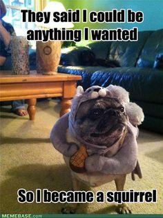 Haha! #alphagams #AGD #AlphaGammaDelta #humor #squirrel