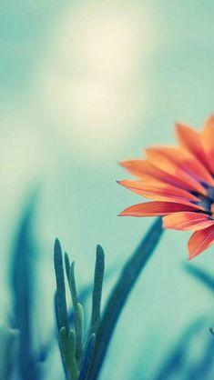 Flower iPhone 5 Wallpaper