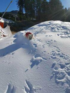 snow lovin' Westie...