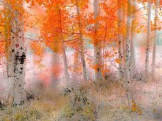 4050 by peter holme iii - Photo 127857795 - Watercolor Art Lessons, Watercolor Mixing, Watercolor Projects, Abstract Watercolor, Abstract Landscape, Watercolor Paintings, Abstract Art, Australia Landscape, Tree Images
