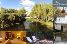 Olive Thrush Cottage, Hotel in Südafrika Hotels, Prince Albert, Aquarium, Cottage, Cottage House, Travel Destinations, Viajes, Goldfish Bowl, Cottages