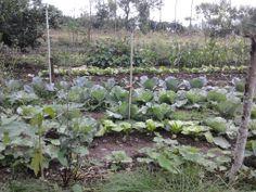 11月11日,可愛的菜蔬又長大許多了。