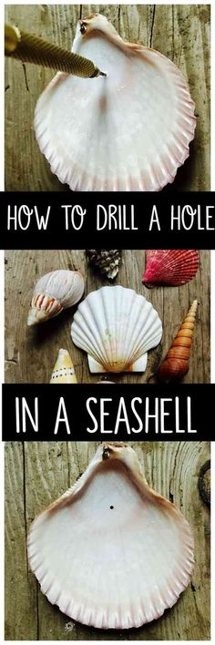 How to drill a hole in a seashell without breaking it. Learn how to drill a hole in a seashell with a simple tool you can purchase from the craft or hardware store. Make crafts or decorations with your shells. Sea Crafts, Nature Crafts, Crafts To Make, Arts And Crafts, Baby Crafts, Kids Crafts, Plate Crafts, Seashell Art, Seashell Crafts