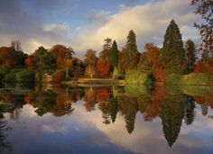 An almost perfect reflection of Autumn colour in the Middle Lake at Sheffield Park, East Sussex from pale pampas grass, and deep green rhododendrons to gold, orange and red acers. Ideal for a #GBwalk?