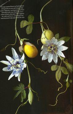 lemon+branch+flowering+nature