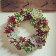 .plant wreath