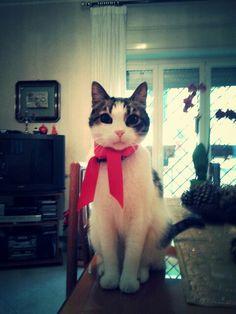 Un micio natalizio