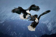 Aguilas de Dios en las Alturas: Que puedo aprender de las Aguilas