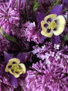 Lilac and columbine flowers.