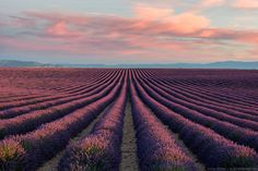 """On the Valensole Plateau, perfect rows of beautiful lavender seem to stretch as far as the eye can see.   Waking up to these soft colors was the perfect way to spend the morning of my birthday. While most people would've taken the opportunity to sleep in, I was excited to wake early and capture the first light on these beautiful fields of lavender.   If you're interested in my work, feel free to drop me a line on <a href=""""http://instagram.com/elialocardi"""">Instagram</a> or my website <a…"""