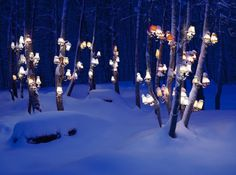 Lamps on trees