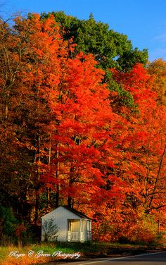 Vibrant #autumn colors