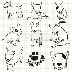 Line drawing of Bull terrier dog set on grid paper use for elements design.