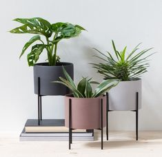 Adding green plants is a simple and easy way to bring life to your home decorating, in Anna's view. Flowerpots, available in three colours and one size: cm. Price per item Price DKK / EUR / ISK 1484 / NOK / GBP / SEK / CHF / FO-DKK Decoration Plante, Decoration Table, Planet Decor, Plantas Indoor, Decoration Restaurant, Metal Plant Stand, Pinterest Home, Modern Planters, Interior Plants