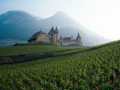 Suiza - Un viñedo pintoresco cerca de un castillo