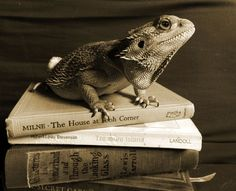Book Dragon by GreySails.deviantart.com