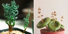 10 weird and wonderful houseplants you never knew existed  - housebeautiful.co.uk