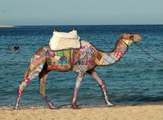 The Preppy Hump Day Camel!