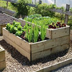 timber raised vegetable garden