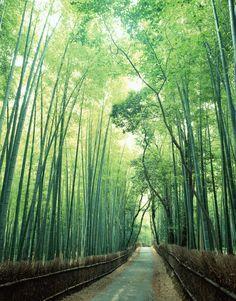 Bosques de bambú en el Parque Takebayashi, Japón Bora Bora, Santorini, Places To See, Places Ive Been, Beautiful Places, Beautiful Scenery, Amazing Places, Skyline, Wonders Of The World