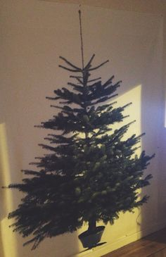 Because we don't have quite enough room for a Christmas tree...