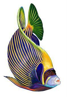 Porcelain Emperor Angelfish Large