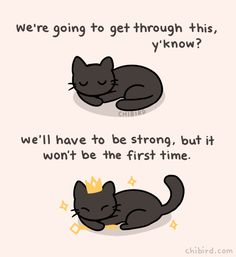 Quotes Encouragement Chin Up Best Ideas Inspirational Animal Quotes, Cute Animal Quotes, Cat Quotes, Life Quotes, Animal Fun, Cute Messages, Positive Messages, Positive Quotes, Cheer Up Quotes