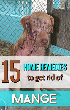15 Home Remedies to Get Rid of Mange