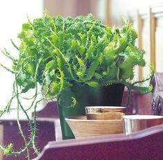 Odlingstips för lättskötta krukväxter - 12 sorter med karaktär | Wexthuset