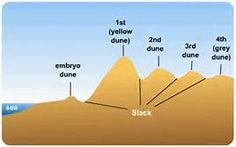 parts of a sand dune - Bing images