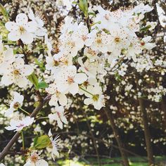 Springtime | @designconundrum