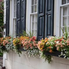 Learn how to make a Charleston-style box planter that will spruce up any window with color.