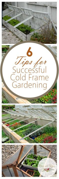 6 Tips for Successful Cold Frame Gardening