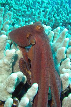 Octopus. I just love them! We're going to need  at least one! Theme: Under the  sea with Nemo #treetopiaholidays