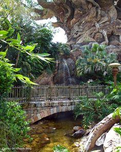 Disney's Animal Kingdom - Discovery Island Trails - Tree of Life