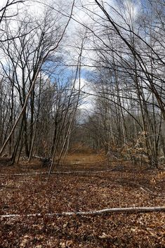 Historic Dogtown is a fascinating and terrifying abandoned ghost town in Massachusetts. Hiking Trail Maps, Hiking Trails, Lions Live, The Boy King, Most Haunted, Haunted Places, Creepy Ghost, Flickering Lights, Gloucester