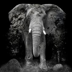 ARTFINDER: The Disappearance of the Elephant, Ex... by Erik Brede - Photo manipulation - political statement art.  The illegal killing of elephants for ivory is driven and sustained by demand from consumers who are willing t...