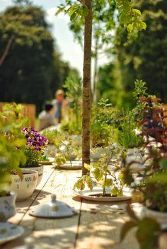 Rose Garden Tea Party at Kew Gardens