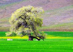 Trees Photography
