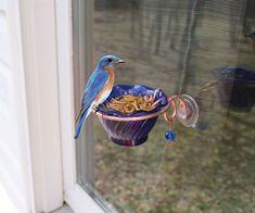 Songbird Essentials SEHHBBWF Copper Bluebird Mealworm Window Feeder for sale online Homemade Bird Feeders, Diy Bird Feeder, Backyard Birds, Bird Watching, Bird Feathers, Garden Projects, Beautiful Birds, Bird Houses, Blue Bird