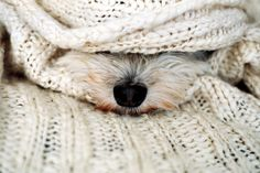The Westie snout!