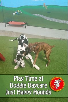 Play time at Just Happy Hounds Doggie Daycare and Boarding Center!  |    #dogplay #doggiedaycare     |     www.JustHappyHounds.com     |     205.419.3300