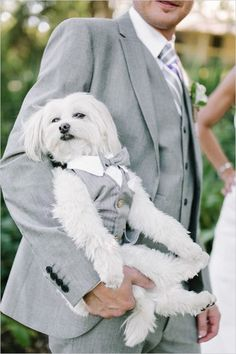 Pets At Weddings: 63 Cutie Ideas | HappyWedd.com