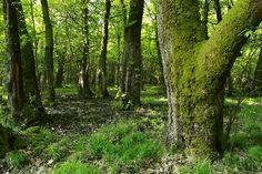 Amber Forest, Turkey