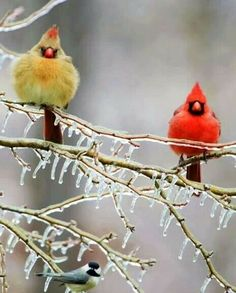I saw these lovely birds this fall and winter. unforgettable.