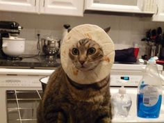 """""""Why can't I just eat for a living?"""" 