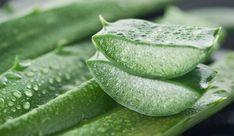 Las propiedades de algunos ingredientes naturales nos permiten hacer remedios efectos para disminuir las estrías. ¡Conócelos!