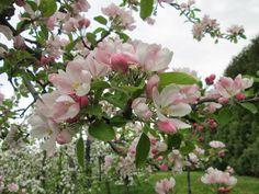 verger+en+fleurs+mai+2013+005.jpg (1600×1200)
