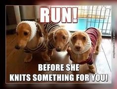 This is what my weenie dog thinks!!!